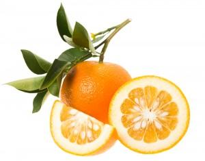 ビターオレンジ2